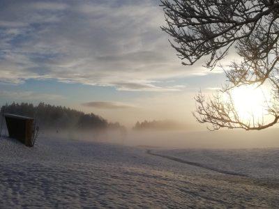 Adler_Winter_3