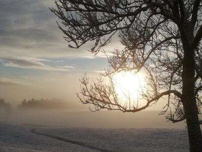 Adler_Winter_4