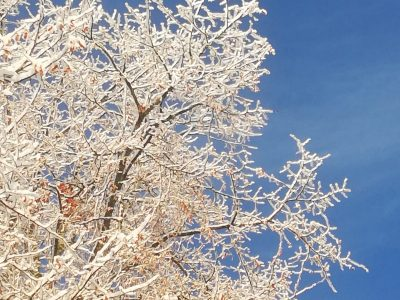 Adler_Winter_6
